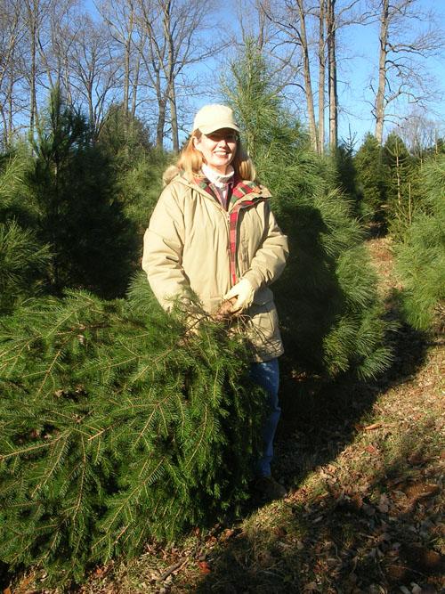 treefarm1